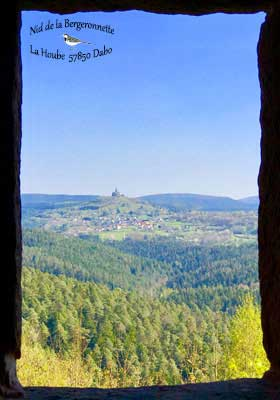 Tourisme au Pays de Sarrebourg - Dabo - Nid de la Bergeronnette